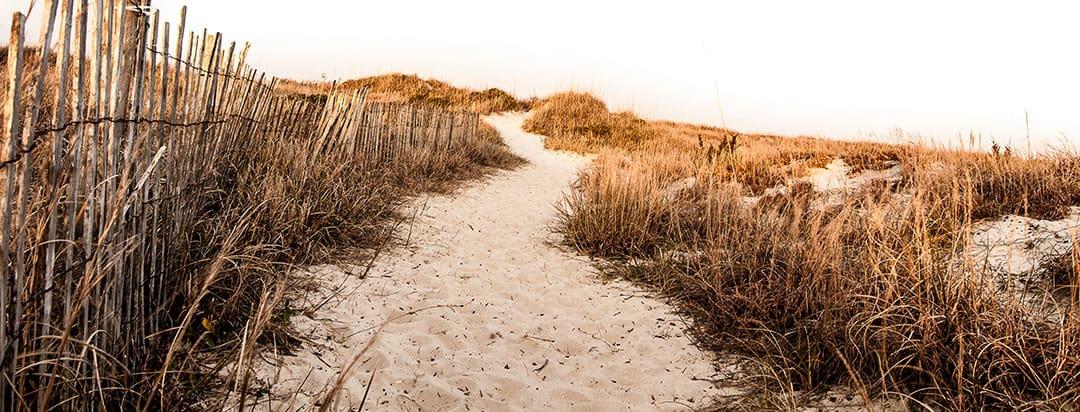 Image Myrtle Beach sand dunes